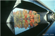 Bridge in the Fall