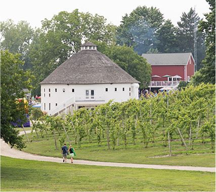 View of walking path and vinyard with house in background