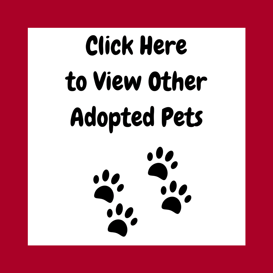 adopted other pets