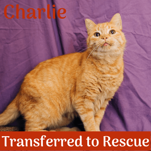 Charlie 3484 transferred
