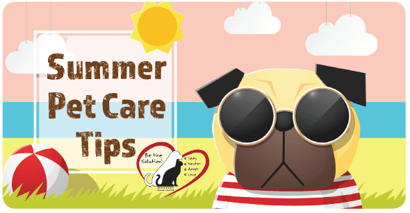 pet summer care tips