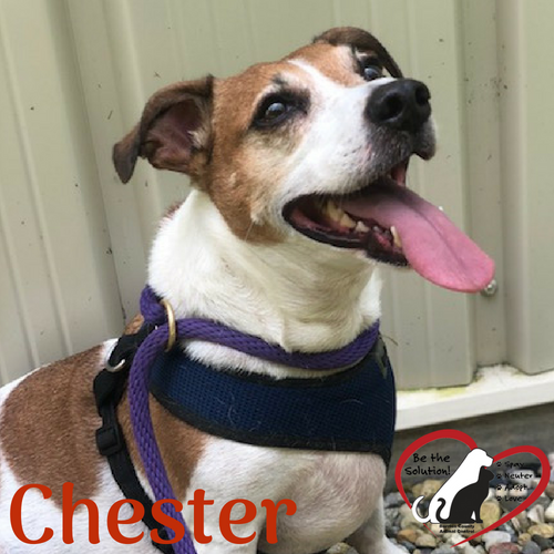 Chester 3250